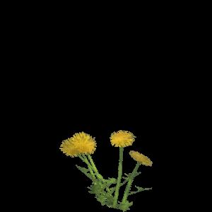 Alchemy recipes kingdom come deliverance wiki dandelion mightylinksfo
