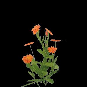 Alchemy recipes kingdom come deliverance wiki marigold mightylinksfo