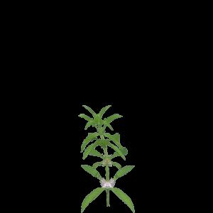 Alchemy recipes kingdom come deliverance wiki mint mightylinksfo